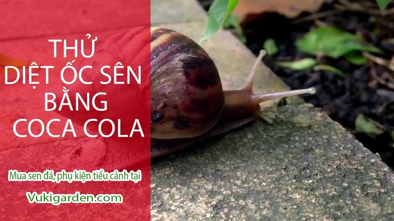 Vuki Garden| Thí nghiệm vui | Diệt ốc sên bằng coca cola
