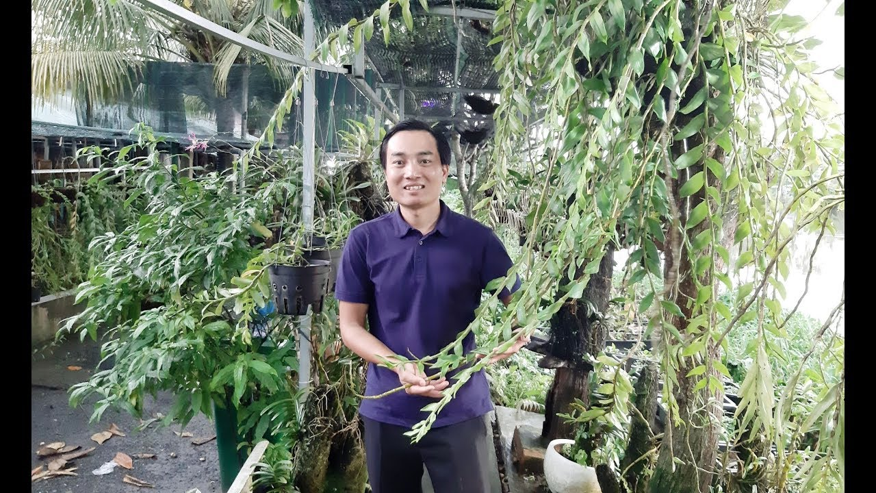 Vườn Lan Độc Đáo Xanh Mướt Bên Bờ Sông Của Sư phụ anh Nguyễn Ngọc Hà [HOALANTV]