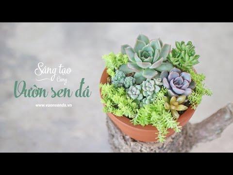 Ý tưởng trang trí sen đá cực xinh (Ep 01) - Succulent containers ideas -www.vuonsenda.vn