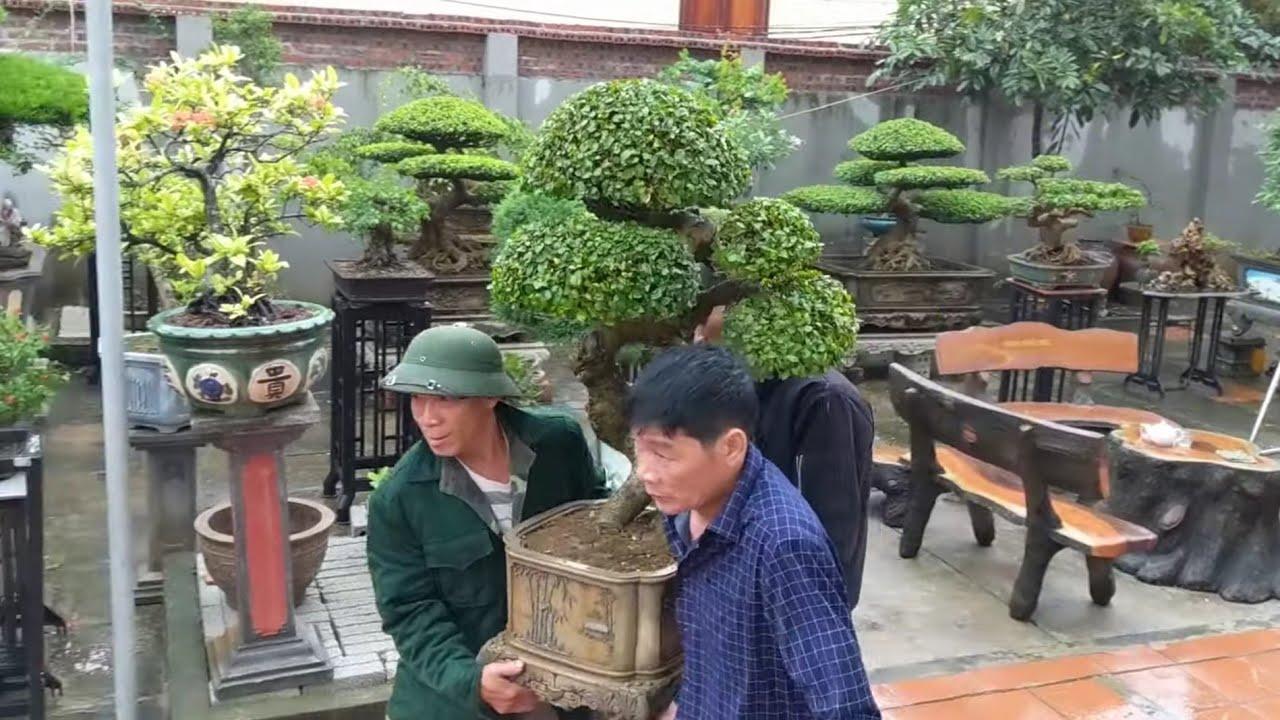 7 tác phẩm mới giao dịch đã vào vị trí ổn định tại nhà anh Thức chủ nhiệm CLB Hưng Long.