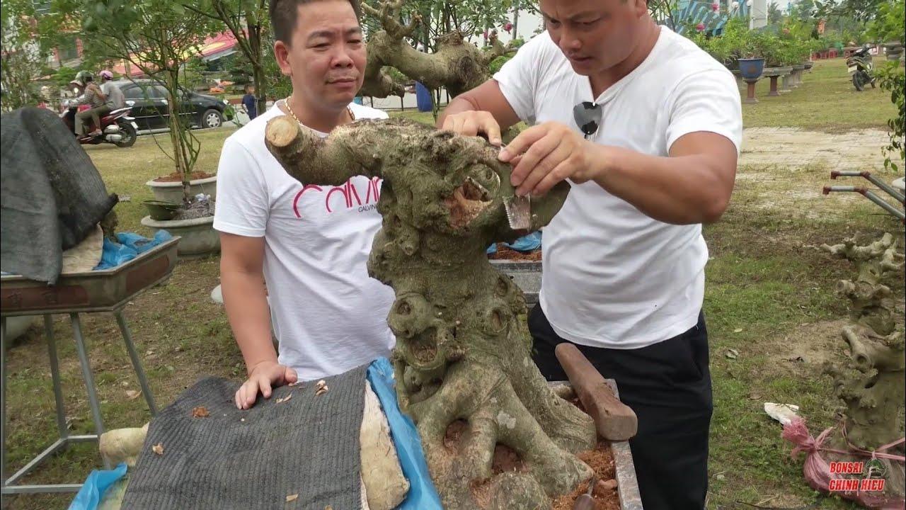 8 triệu phôi Nam Điền đang được chủ nhân xử lý ngay tại Triển Lãm, và cây Sếu có 1.0.2  tại TLTH.