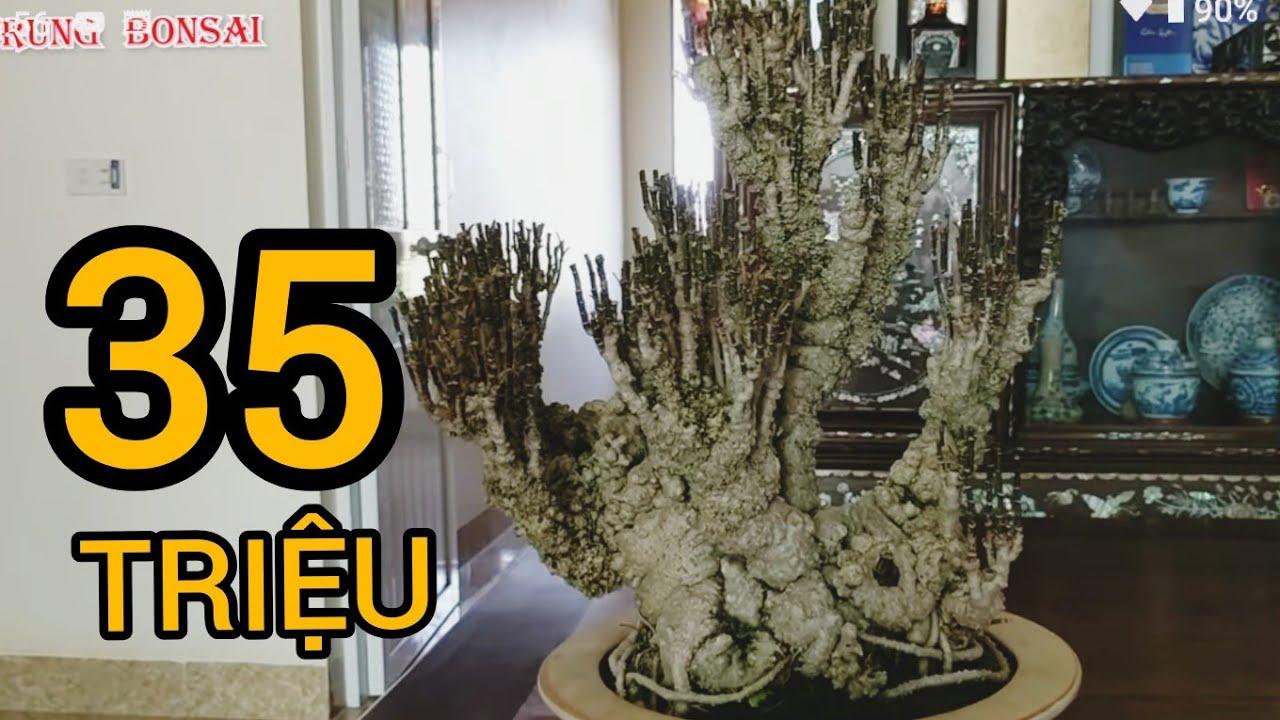 BẤT NGỜ giao dịch cây hoa nhài 20 triệu khủng TRẢ GIÁ cây đinh năng 35 KHÔNG RA