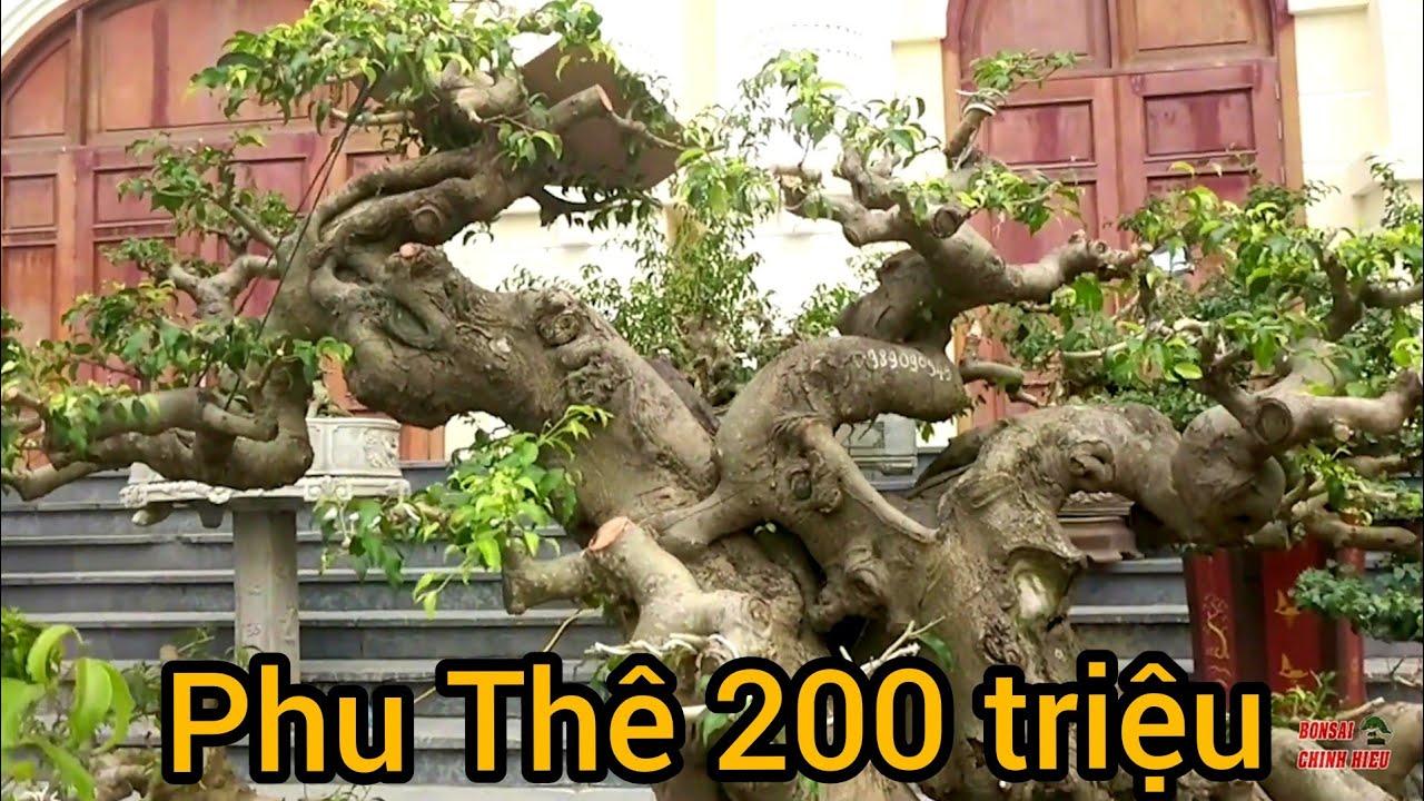 Báo giá loạt phôi. Cao nhất là 250 triệu và rất nhiều phôi giá hợp lý tại Festival T.Hóa.