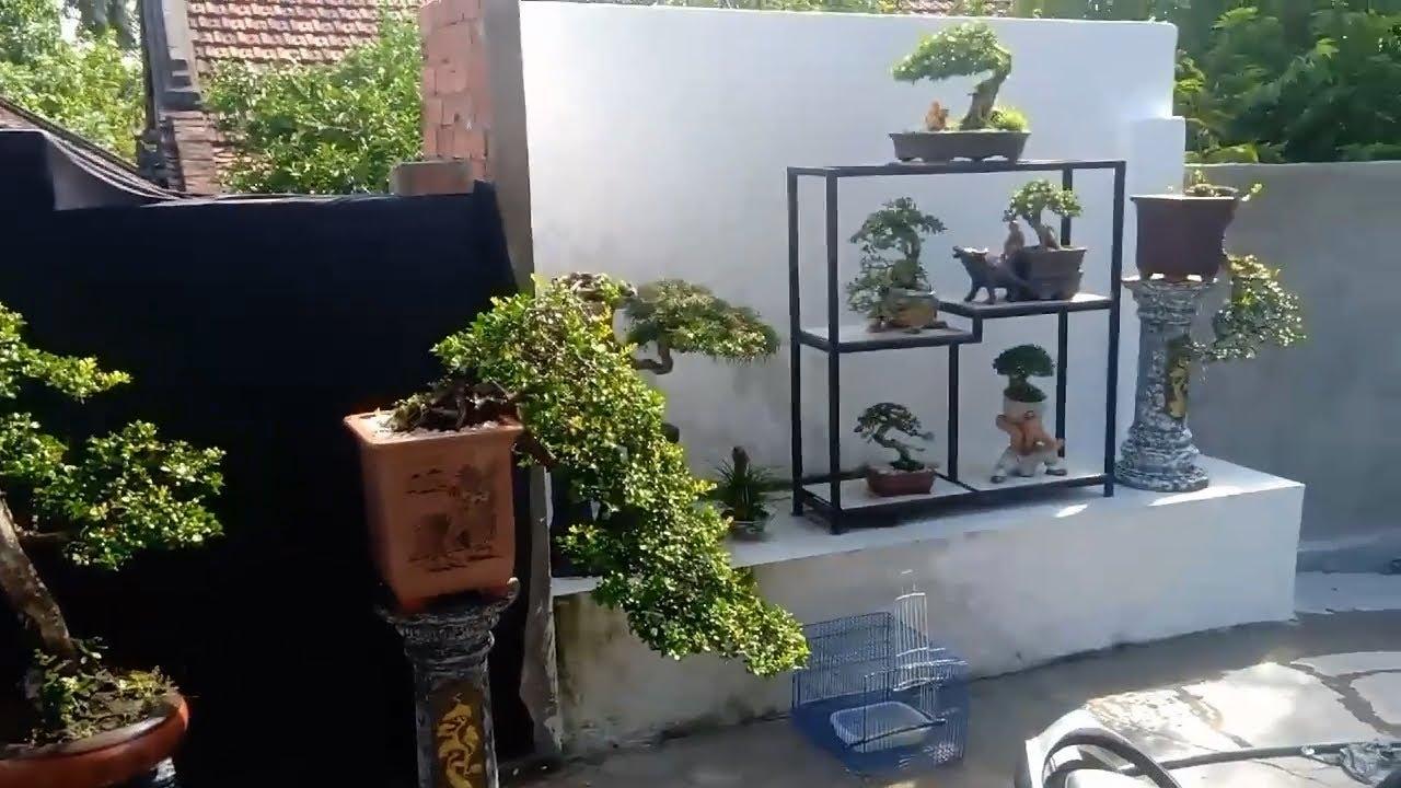Bonsai Vietnam: Series bonsai chào Thu của nghệ nhân Việt