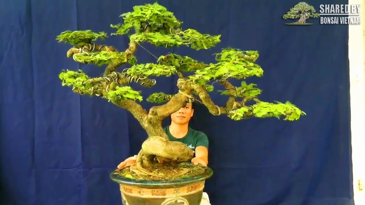 Bonsai Vietnam collection #103 || January 2019