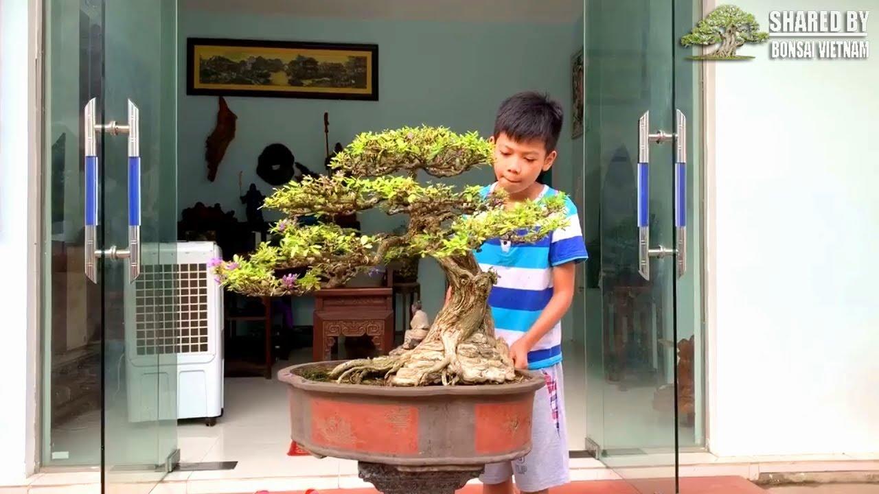 Bonsai của nghệ nhân Việt đang chia sẻ tháng 9 || Số #115