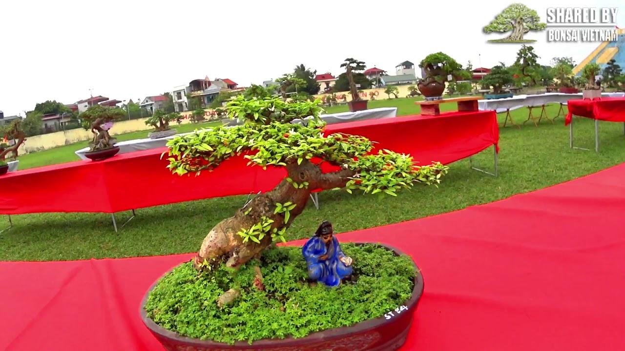 Bonsai mini ở triển lãm Sinh Vật Cảnh Sơn Tây 2019