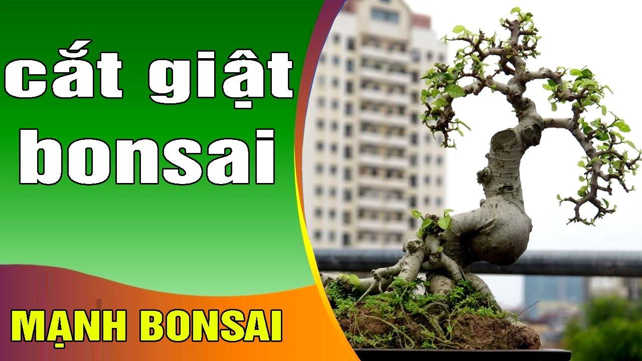 Cách cắt giật Bonsai mini, ai mới chơi nên tham khảo