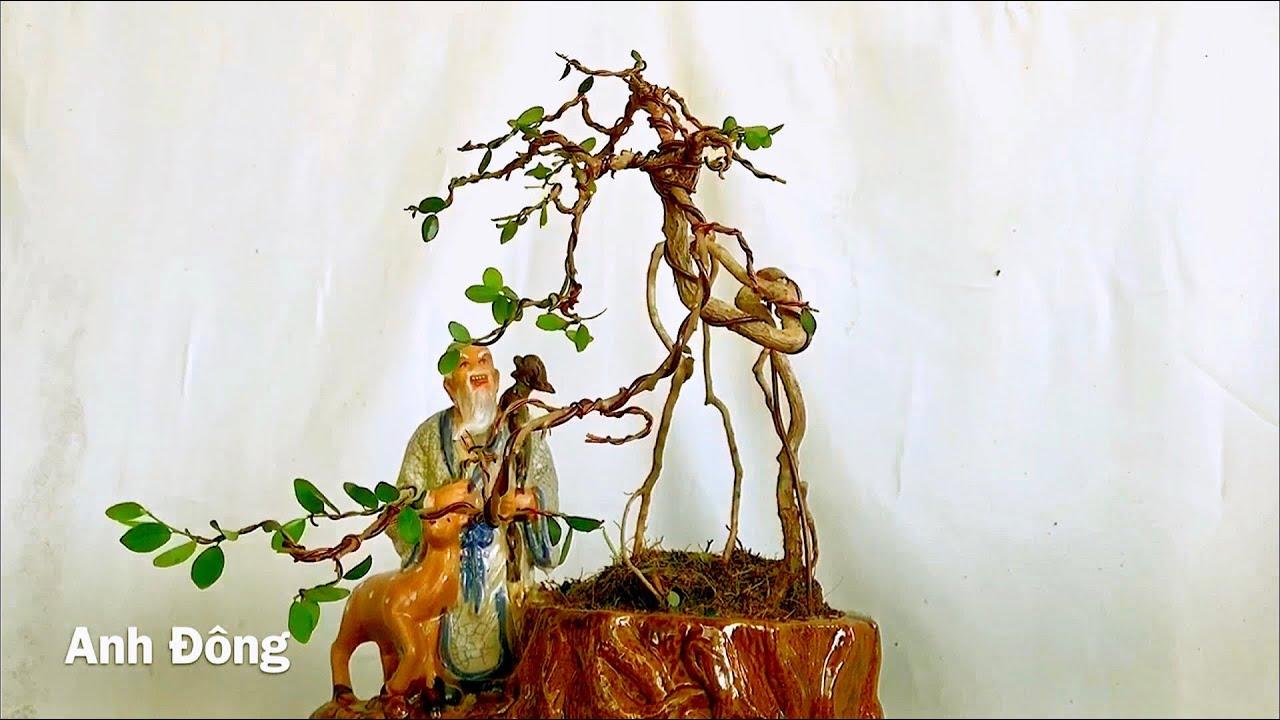 Cây bonsai dáng lạ