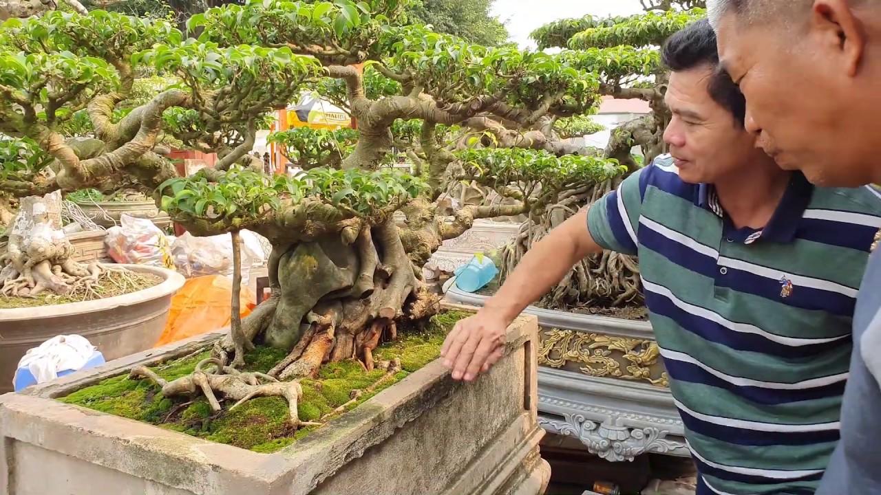 Chiêm ngưỡng 4 tp mới nhà anh Thành Quế và đôi Trực Huyền 50 triệu trồng vào đôi chậu đá rất đẹp.