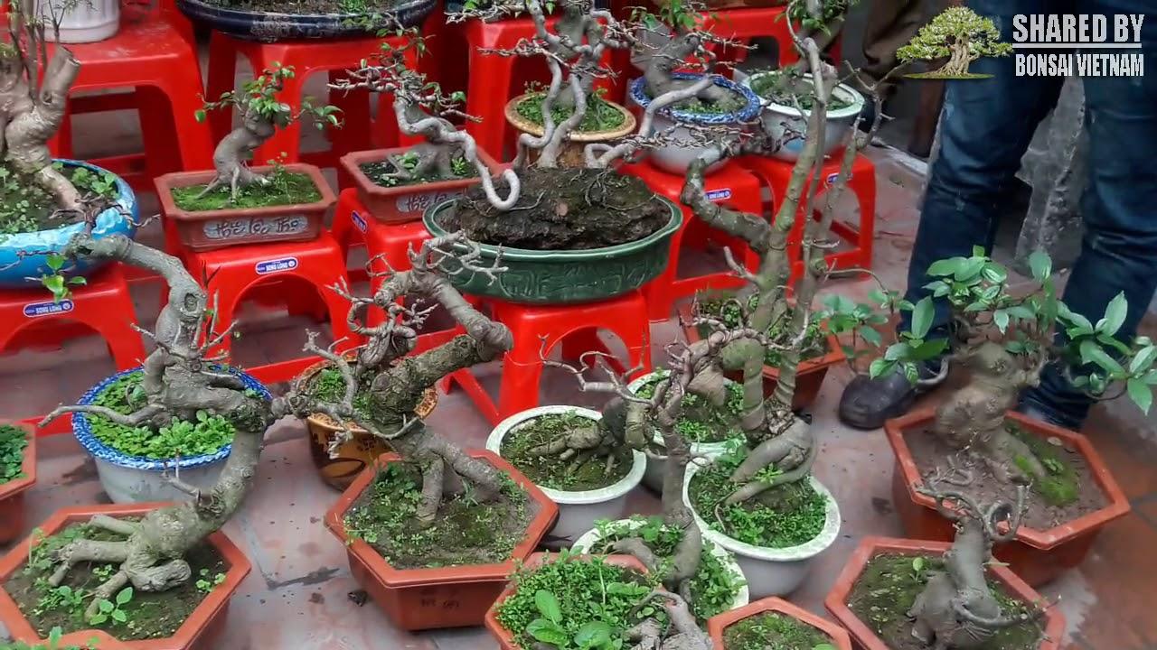 Chợ Viềng : Cuối phiên giá Bonsai giảm bất ngờ