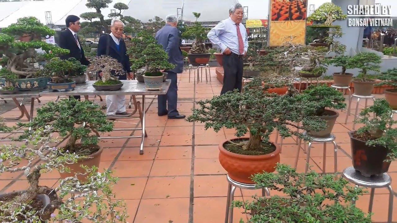 Choáng ngợp với khu trưng bày Bonsai mini ở Hội Chợ SVC Bắc Ninh 2018
