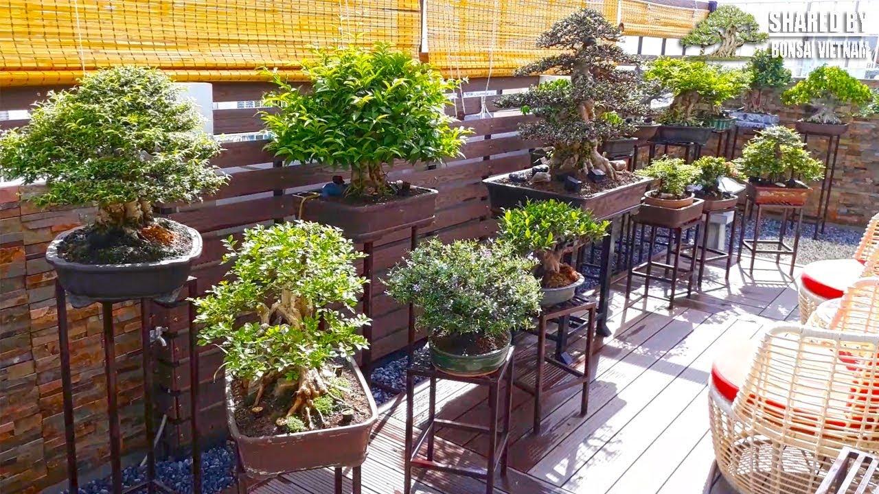 Đam mê Bonsai, Việt Kiều mang cả khu vườn lên nóc Cao Ốc ở Sài Gòn