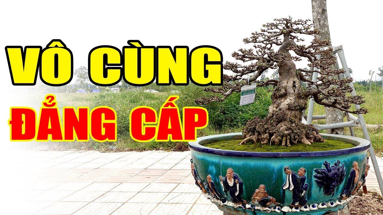 Dãy cây của anh em Sài Gòn mới thật sự đẳng cấp quý vị ạ