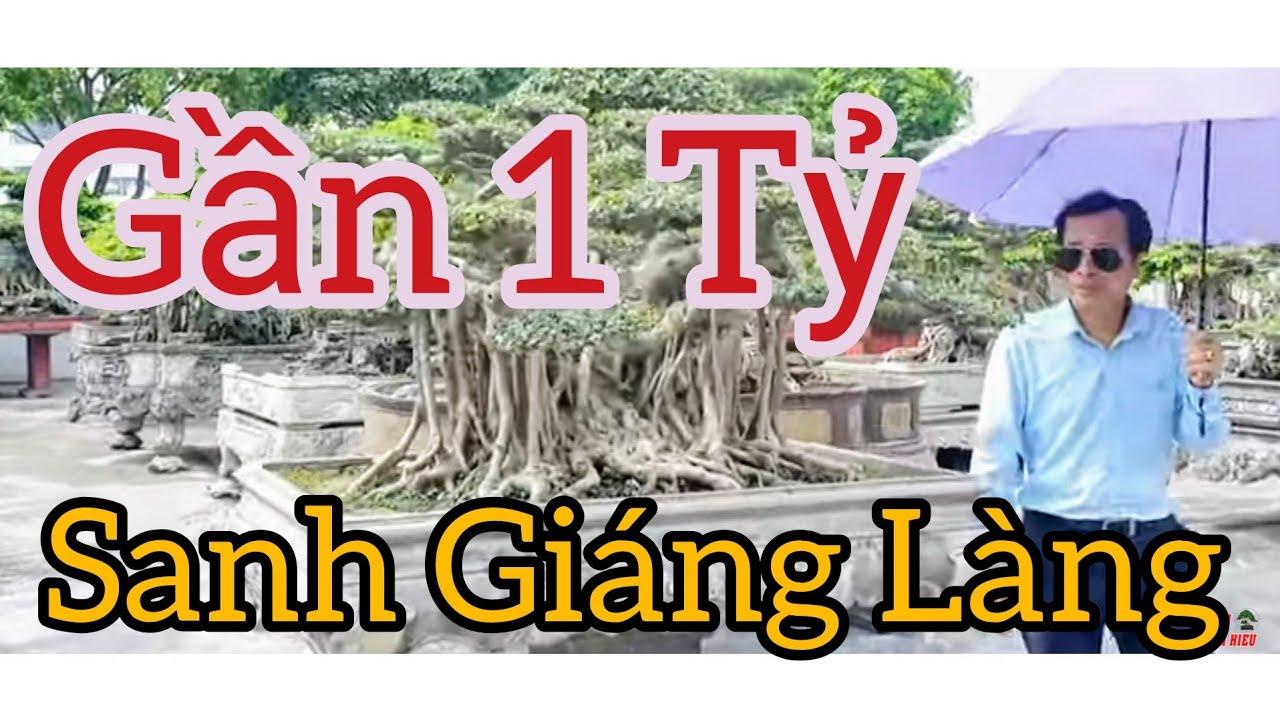 Gần 1 tỷ Sanh Dáng Làng già đẹp và rất nhiều tp Sanh - Tùng tại cty Thuận An - Kinh - Môn - HD