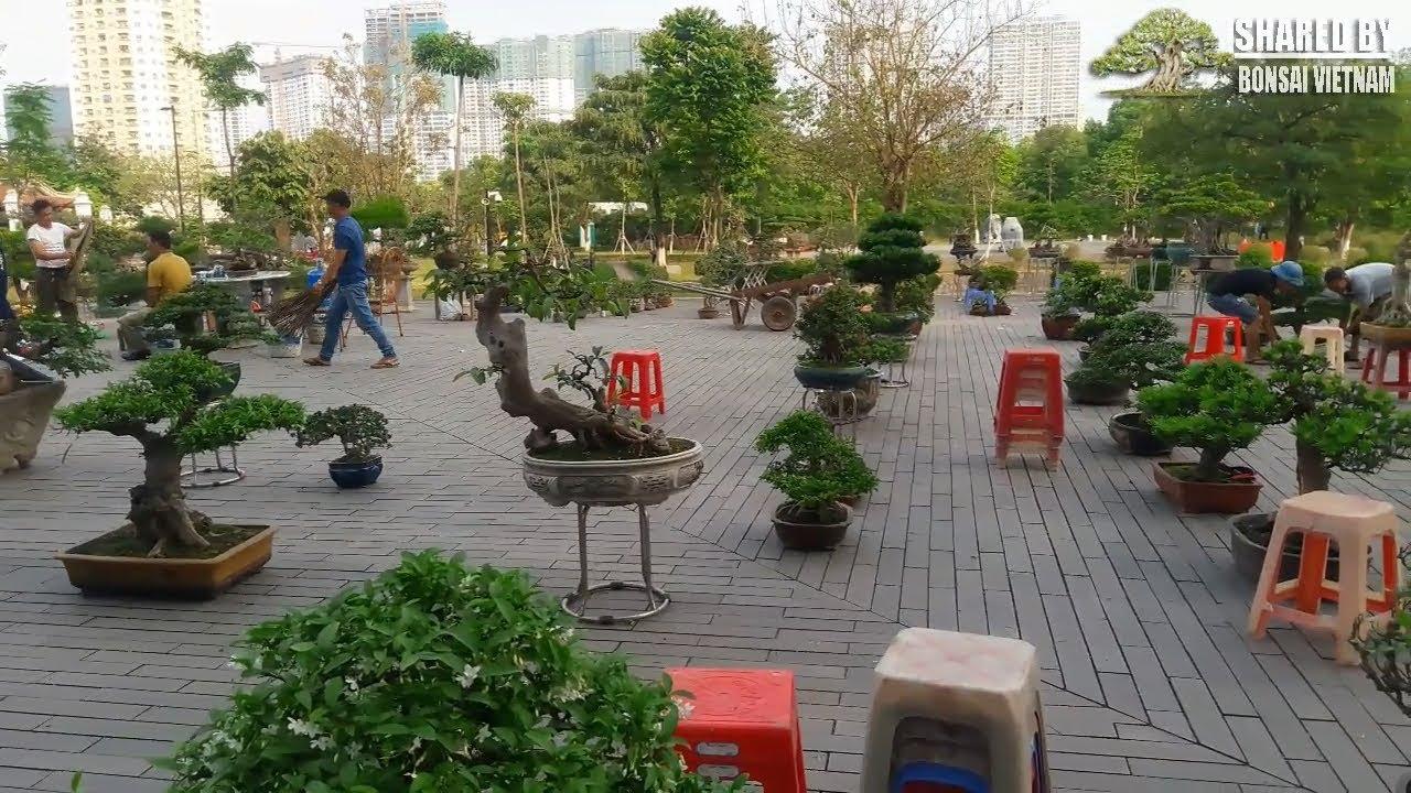 Ghé thăm khu Bonsai thương mại tại triển lãm Cây Cảnh Hà Nội 2018