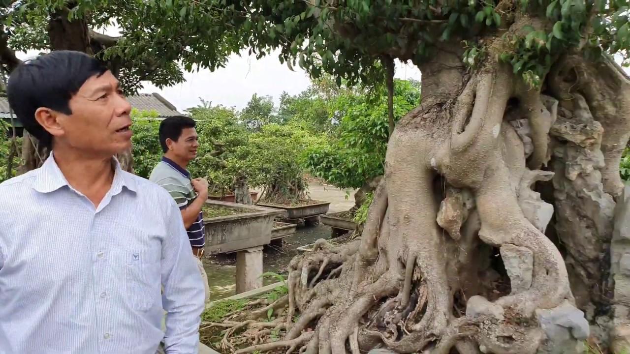 Giật mình với nhà vườn có hàng trăm cái bể đá và nhiều tp Tùng La Hán, có cây tới 5 - 6 trăm triệu.