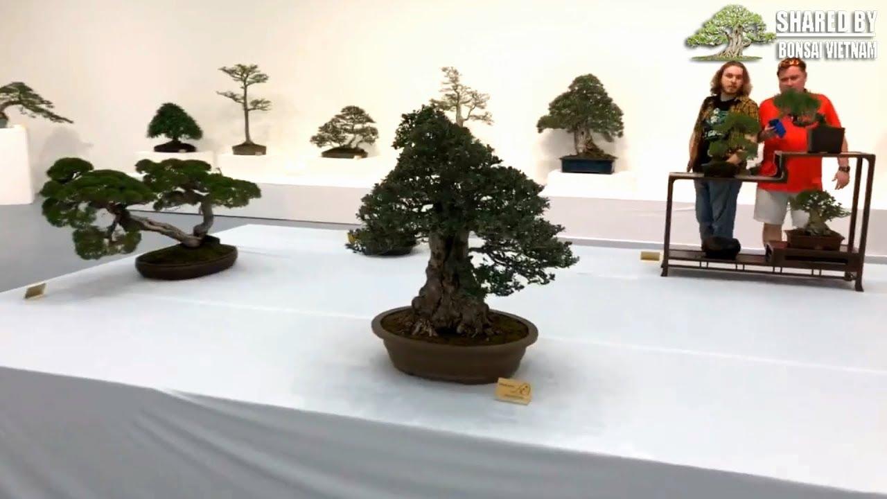 Hãy xem một triển lãm Bonsai của người Mỹ ra sao