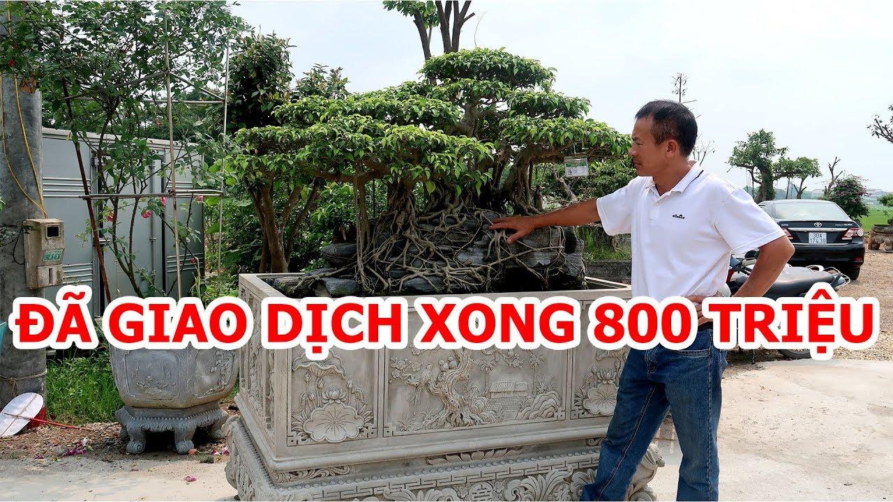 Hôm nay đi Đông Anh Hà Nội xem cây, phát hiện cuộc giao dịch 800 triệu