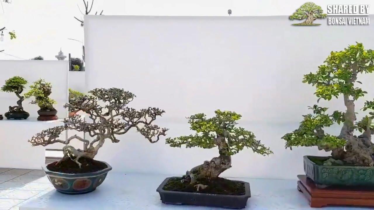 Khai mạc Triển Lãm Cây Cảnh Ninh Hiệp, Hà Nội