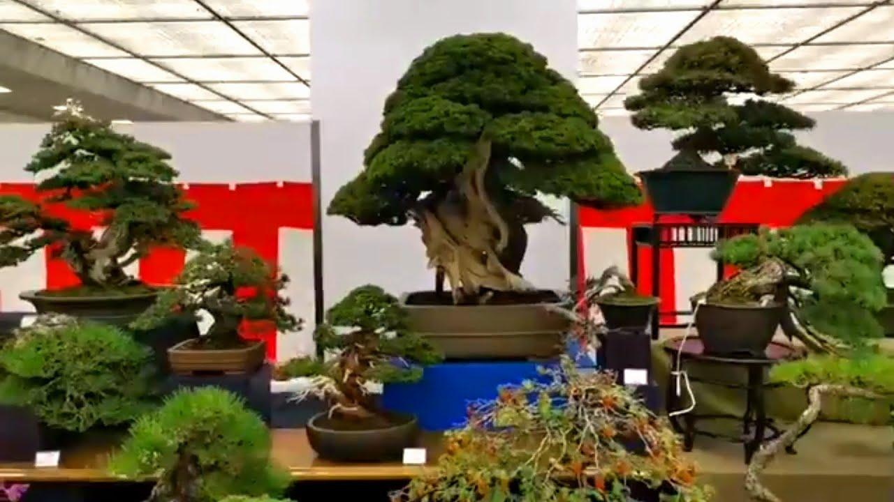 Khu người Nhật bán cây Bonsai, muốn có tất cả