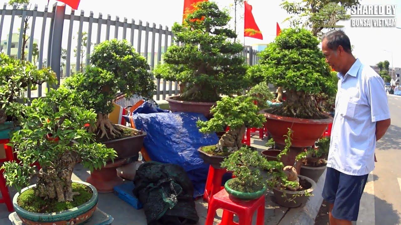 Khu vực Bonsai thương mại của nghệ nhân Long Xuyên