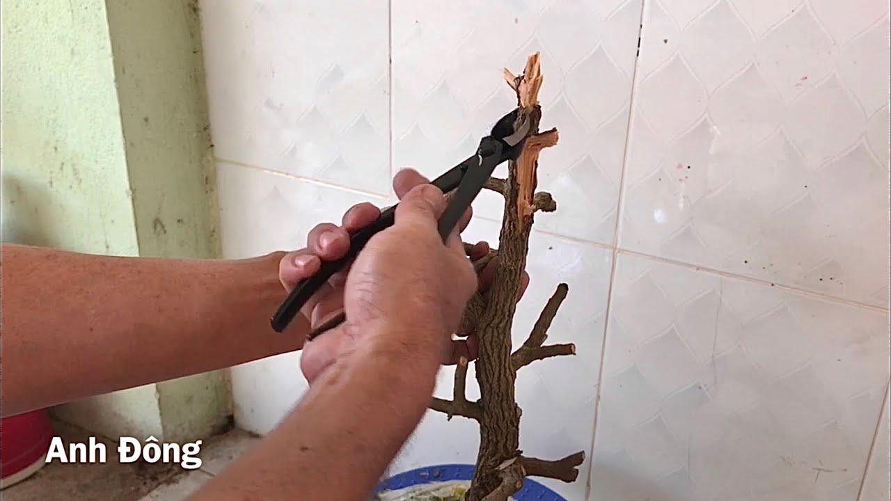 Làm lũa cây bonsai