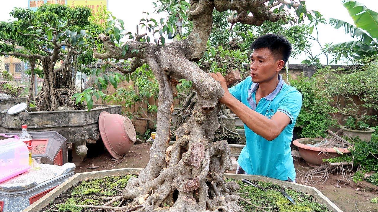Lên Hà Nội mua một cây về làm đẹp