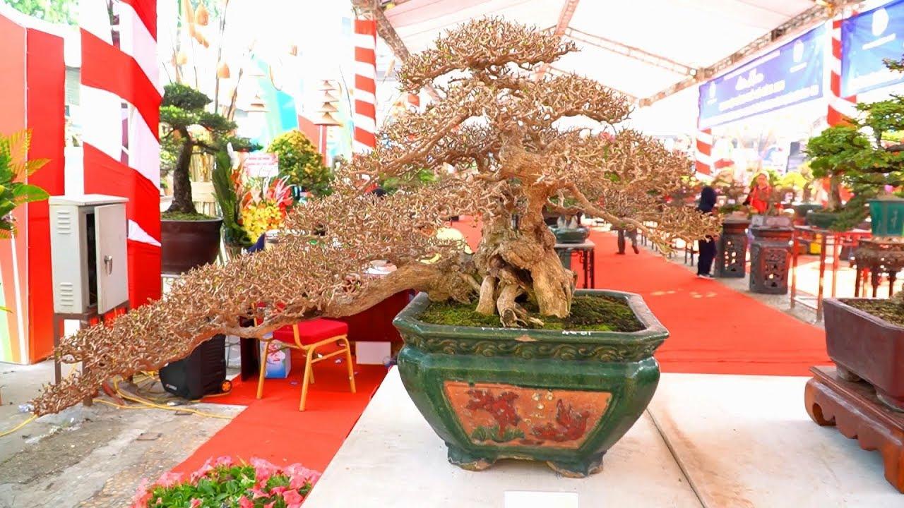 Một cuộc triển lãm bonsai cuối năm đang diễn ra ở Hà Nội || Phần 1