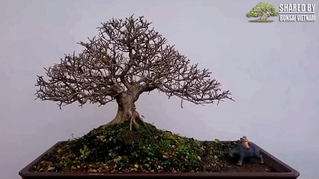 Một số tác phẩm Bonsai mini của nghệ nhân trẻ