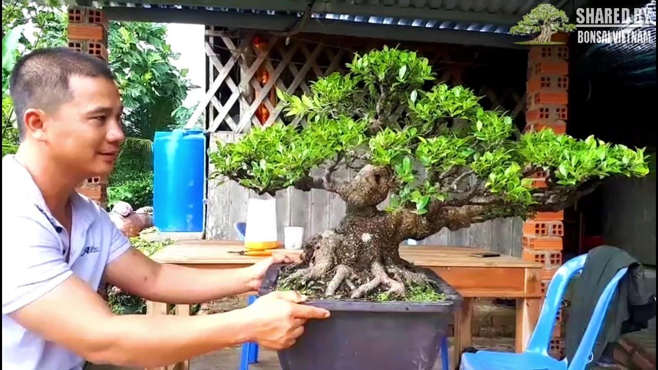 Những tác phẩm Bonsai Việt đẹp nhất tháng 10    Phần 3