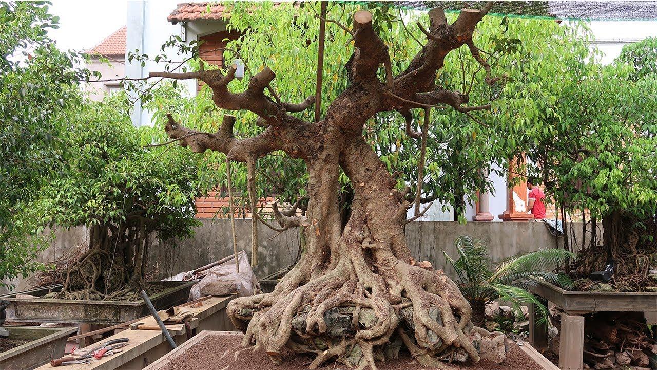 Phá tan hoang 1 cây sanh giáng Long bị lãng quên (phần 3, kết thúc)