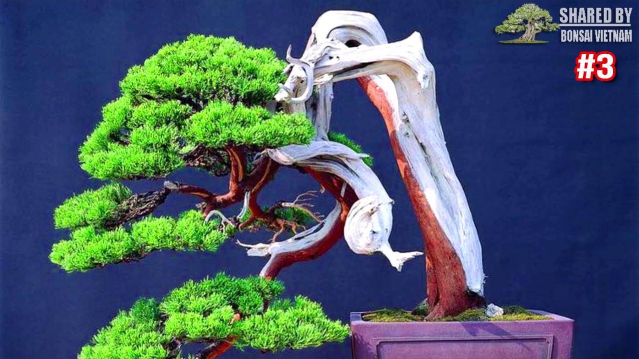 Phong cách Bonsai đáng học hỏi || Bonsai Trung Quốc ▶3