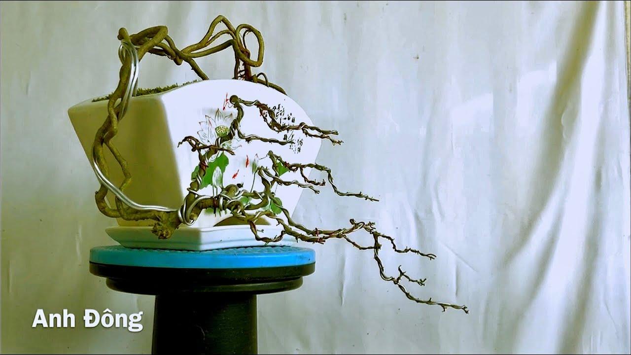 Tác phẩm bonsai phong cách đỗ ôm chậu