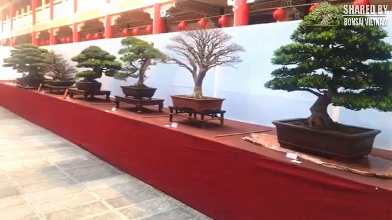 Tham khảo triển lãm bonsai ở Cao Hùng, Đài Loan 2018