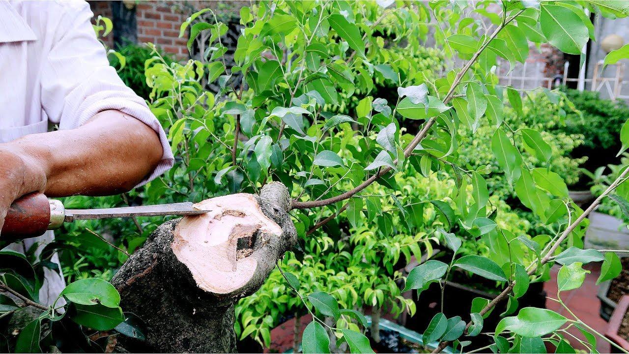 Thợ làm cây mới, có vẻ đẳng cấp hơn xưa