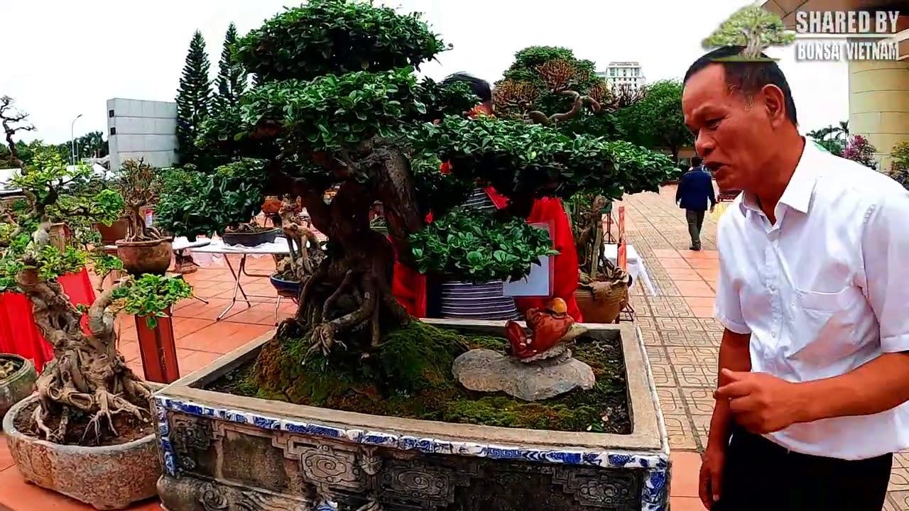 Tiếp tục với khu trưng bày Bonsai để bàn triển lãm Bắc Ninh | Phần 2