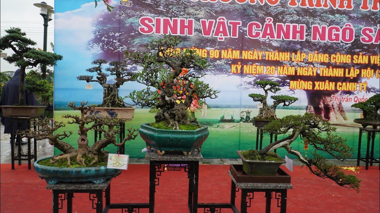 Toàn cảnh triển lãm Sinh vật cảnh Ngô Sài, Quốc Oai năm 2020