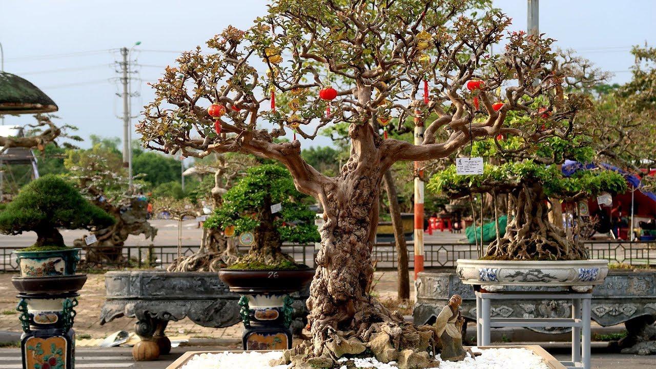Triển lãm sinh vật cảnh Việt Nam, những cây đẹp nhất trên dốc