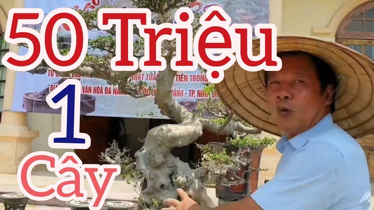 Trưng bày Cây Cảnh thường niên lần 2 tại nhà VH Phường Ninh Khánh