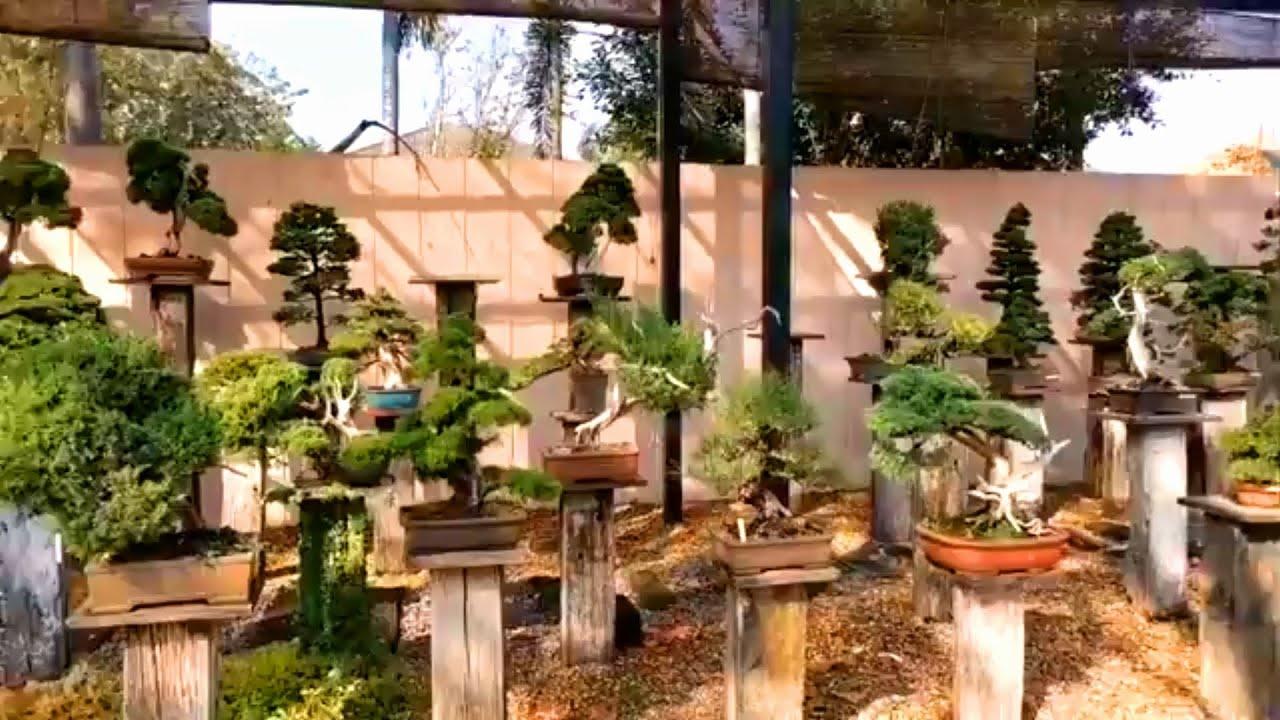 Vườn Bonsai phong cách Nhật Bản lớn nhất Thái Lan