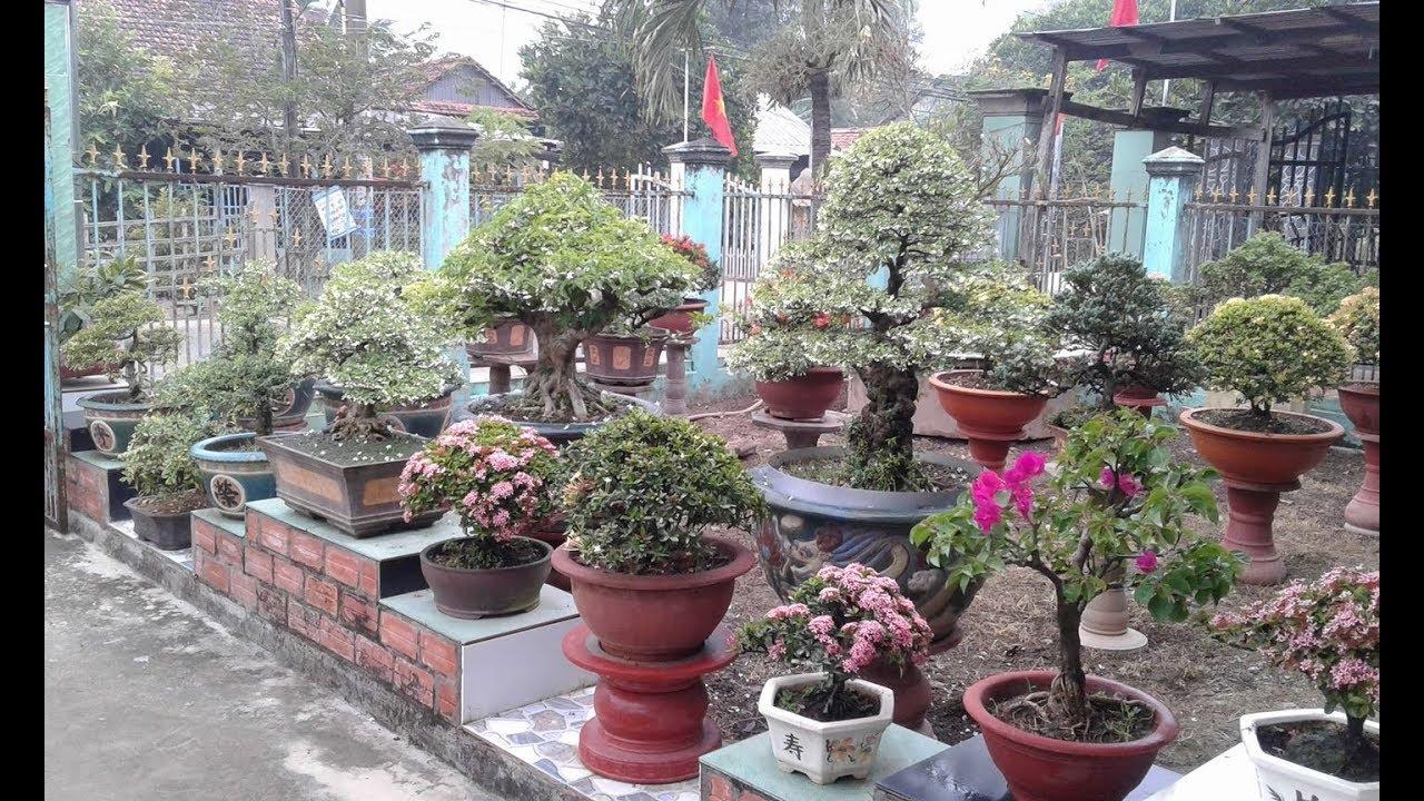 Vườn Kiểng đẹp của nghệ nhân Nguyễn Kỳ, Tân Bình, Đồng Tháp