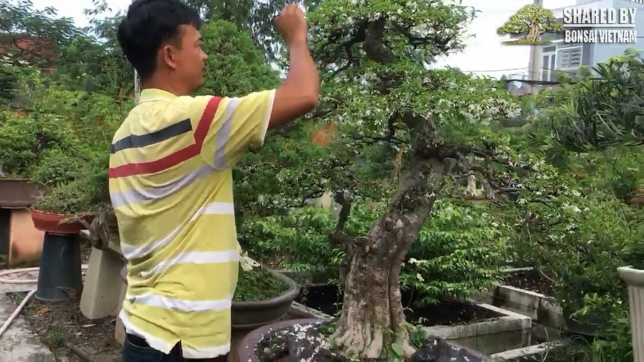 Vườn Kiểng tuyệt đẹp của anh Hai Chánh, Hoóc Môn