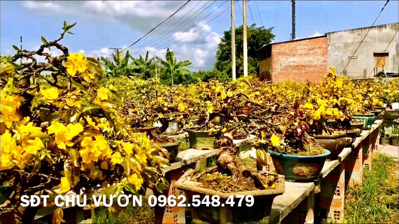 Vườn mai Phước Thịnh Tuy Phước Bình Định