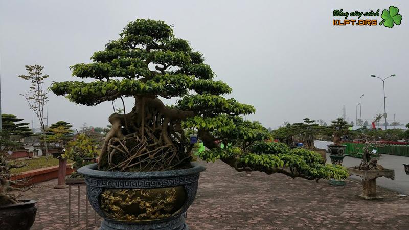 cay-bonsai-dang-huyen-la-gi-klpt