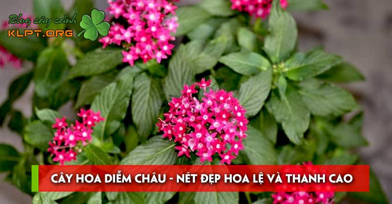 cay-hoa-diem-chau