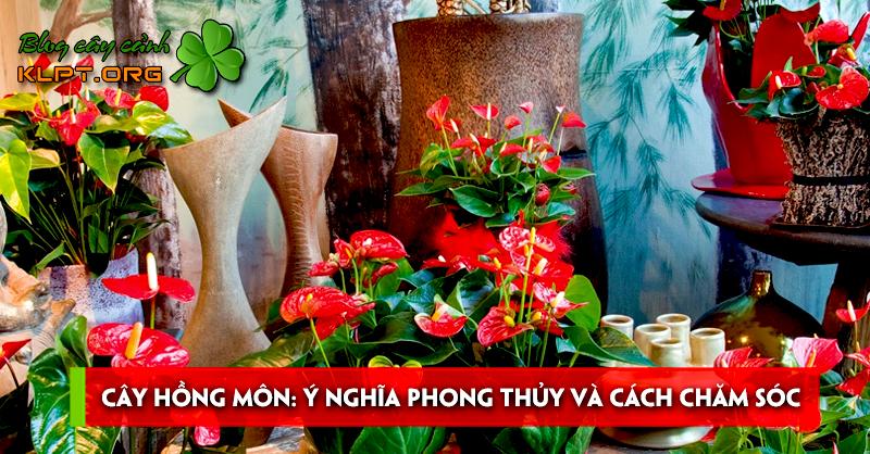 cay-hong-mon