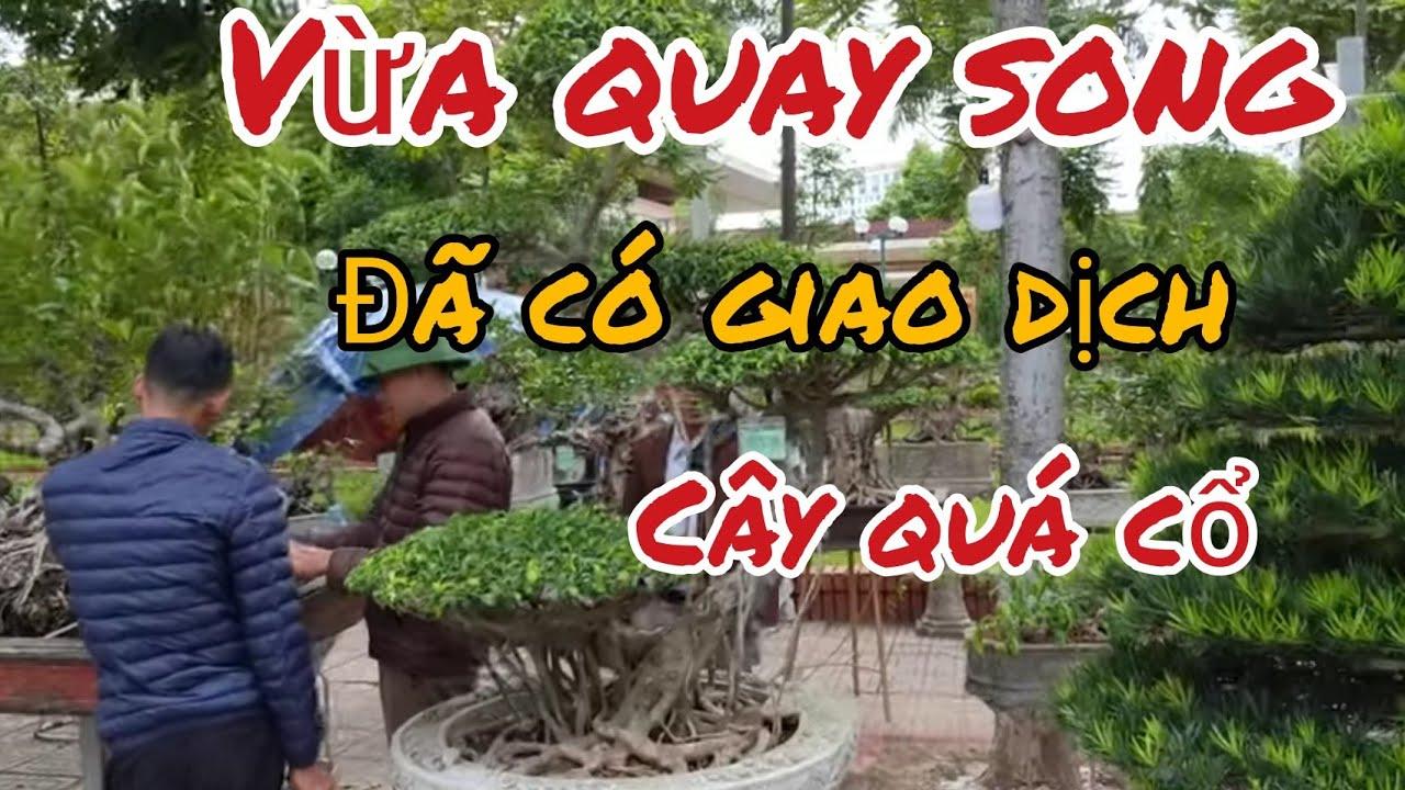 cây xanh cố nhất triển lãm Bắc Ninh được giao dịch với giá cao tại khu hàng chợ các bác tham khảo