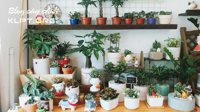 mini-green-shop-chuyen-cay-van-phong-ha-noi-dep-klpt