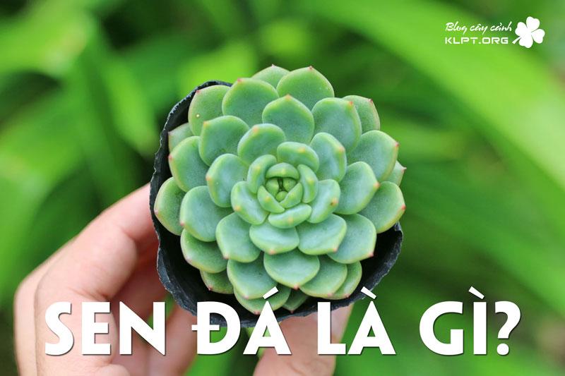 sen-da-la-gi